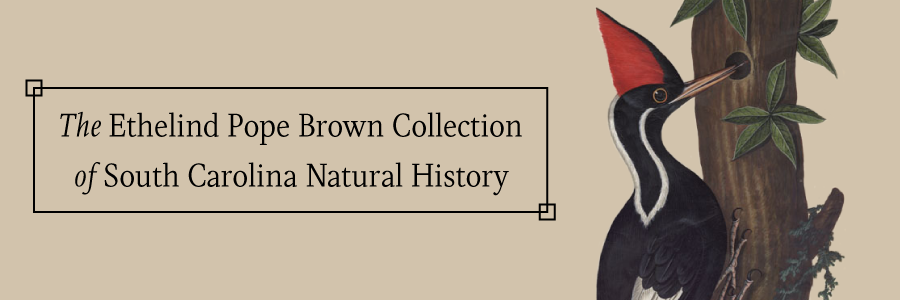 The Ethelind Pope Brown Collection of South Carolina Natural History